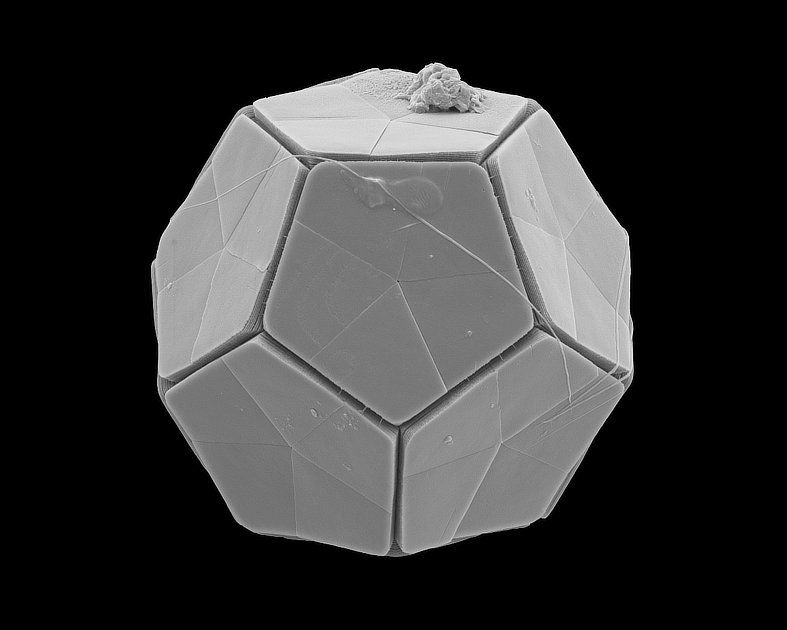 Phytoplankton Dodecahedron